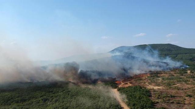 Keşan'daki orman yangını saatler sonra söndürüldü