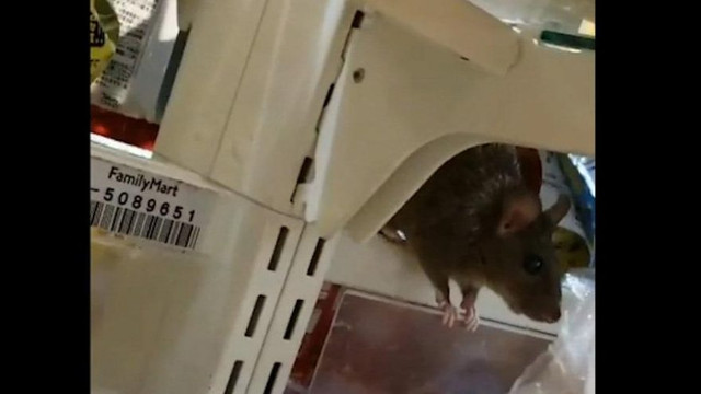 Süpermarket zincirinde fare skandalı !