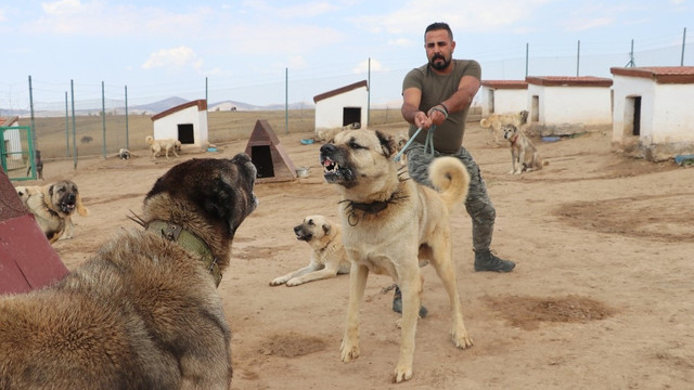Türk sınırlarını Kangallar koruyacak
