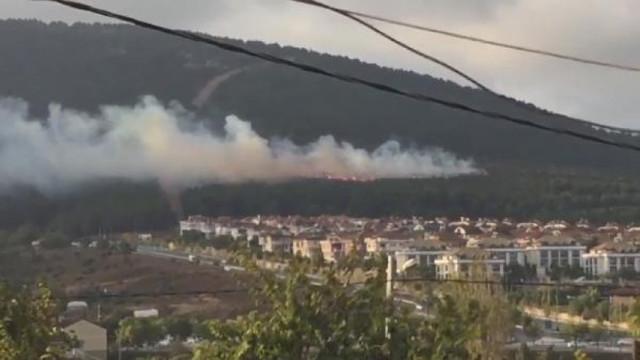 Pendik'te orman yangını !
