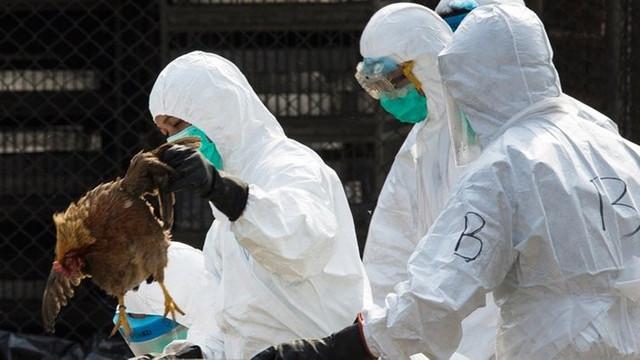 100 binden fazla hayvan itlaf edilmişti... 6 ülke ithalatı durdurdu