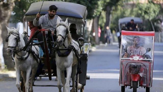 İBB Adalar'daki at ve faytonları almak için harekete geçti