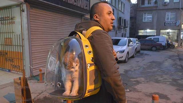 Sokak kedisini sırt çantasında gezdiriyor