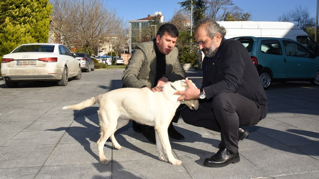 Kadıköy Belediyesi depremzede köpek Kartopu'na kapılarını açtı