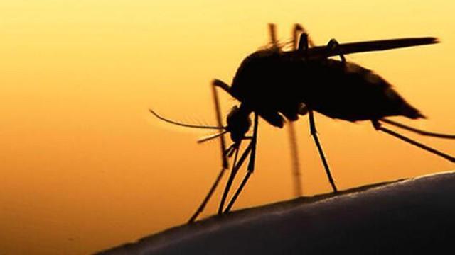 DSÖ yeni tehdidi açıkladı! Sivrisineklerden bulaşıyor