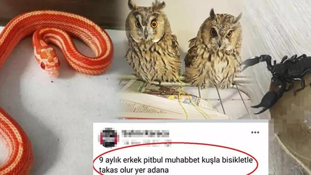 İnternette yasa dışı hayvan ticareti