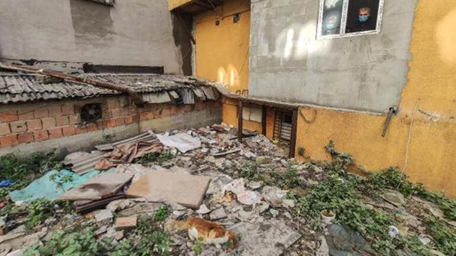 İstanbul'da vahşet! 7 kedi parçalanmış halde bulundu