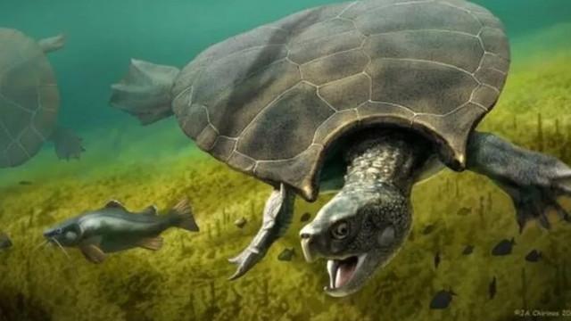 7 milyon yıllık dev kaplumbağa fosili bulundu