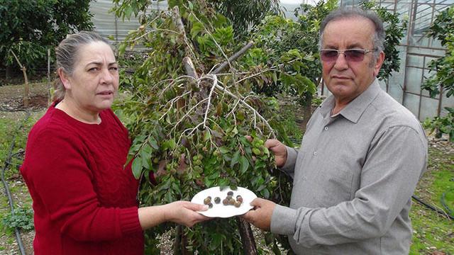 Bu meyve Türkiye'de ilk kez yetiştirildi