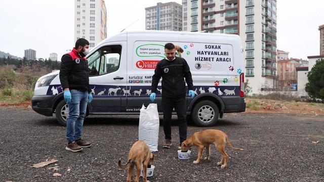 Kartal Belediyesi, sokak hayvanlarının yanında