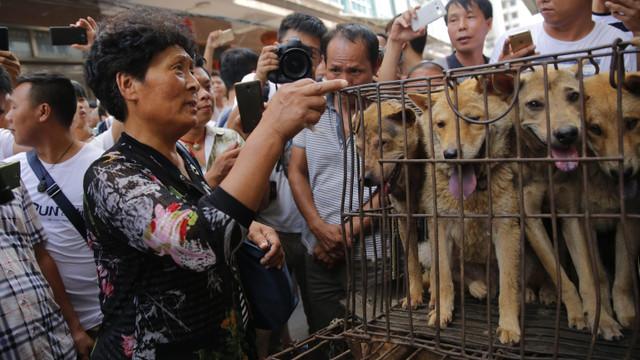 Çin'de kedi ve köpek eti satışı yasaklanıyor