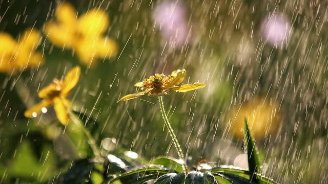 Bunaltan sıcaklara mola, yağış geri dönüyor!