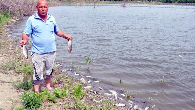 ''Trakya'nın GAP''ında sahile vuran balıklar endişe yarattı