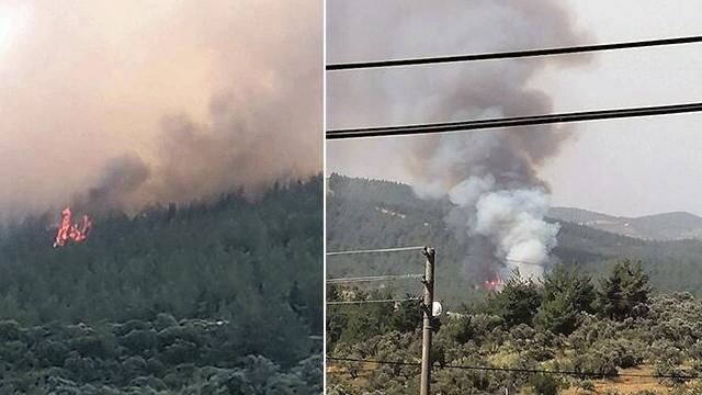 Muğla'da ormanlık alanda yangın paniği