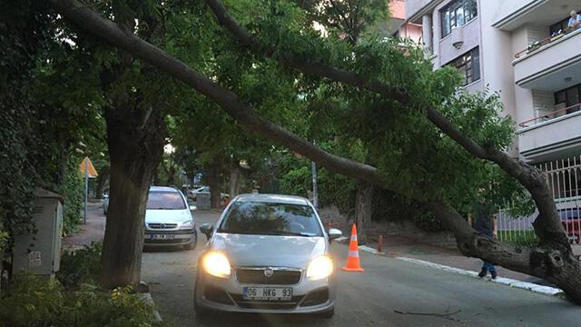 Fırtına Ankara'yı fena vurdu! Ağaçlar devrildi