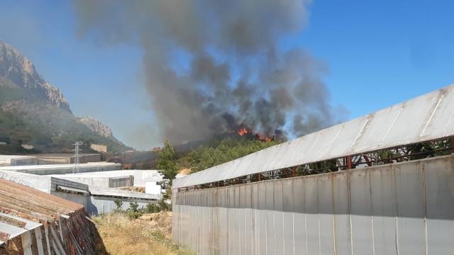 Orman yangını muz seralarını da yaktı