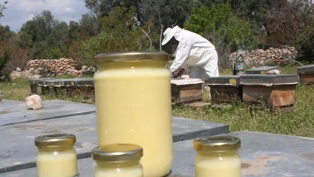 Sahte arı sütüne dikkat! Kilosu 10 bin liranın altındakileri almayın