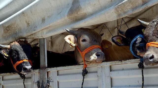Kurban Bayramı öncesi veterinerlerden kritik uyarı