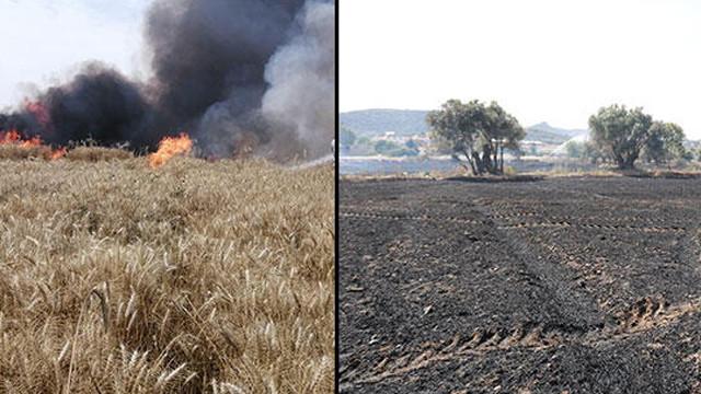 Buğday tarlalarında yangın! 40 ton buğday kül oldu