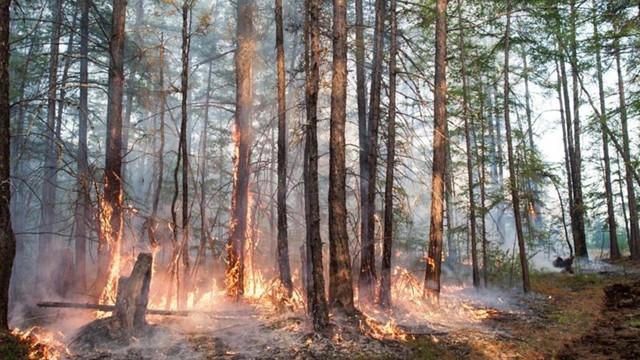 Sibirya'da acil durum ilan edildi! Tarihin en sıcak Haziran ayı!