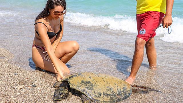 Antalya'da sahile vuran yaralı caretta caretta tatilcileri şaşırttı