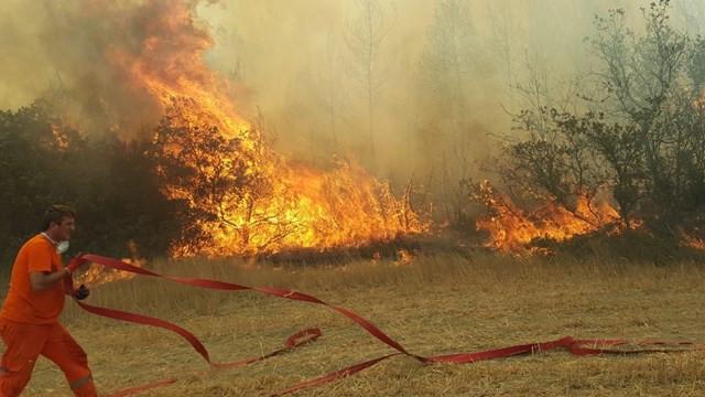 Sakarya Taraklı'da orman yangını: Bazı mahalleler boşaltıldı
