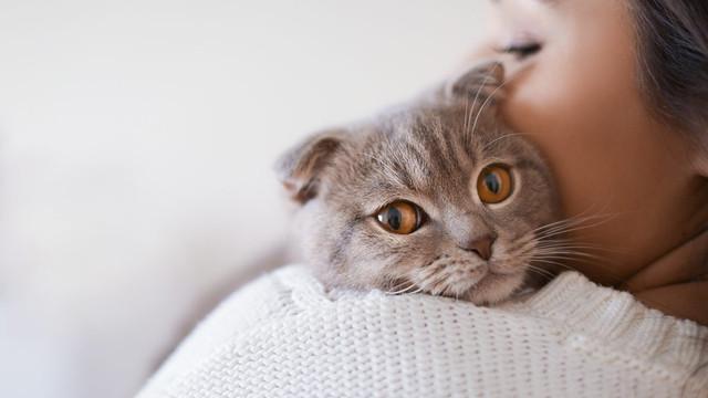 Koronavirüs tahmin edilenden daha fazla kediye bulaştı!