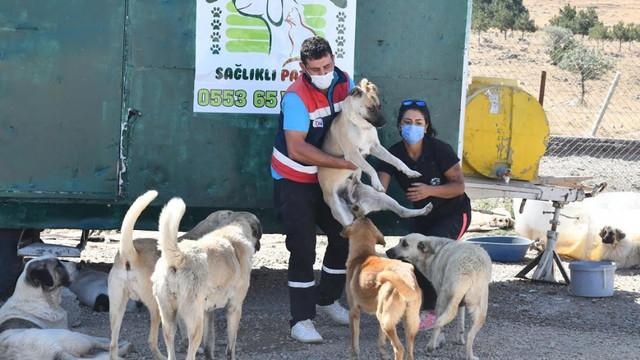 Ankara'da büyükşehir can dostlara desteğe devam ediyor