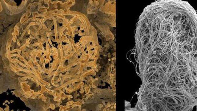 Dünyanın en eski hayvan spermi bulundu!