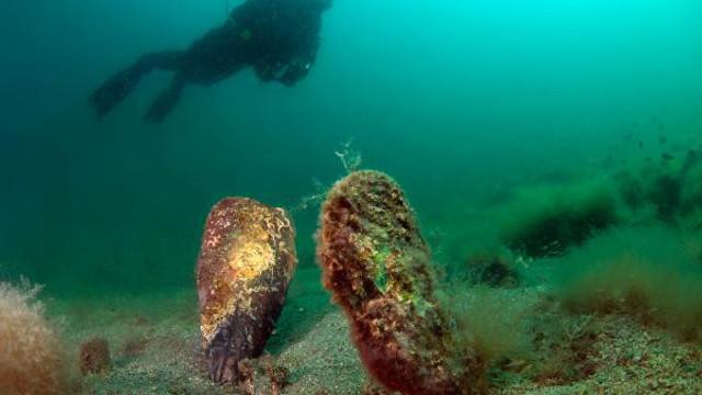 Akdeniz'de büyük tehdit! Denizi temizleyen canlılar hızla yok oluyor