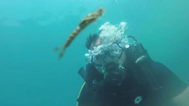 Van Gölü'nde yeni bir canlı türü keşfedildi