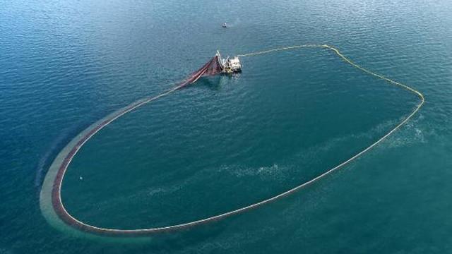 Karadeniz'de görülmemiş olay: Balıklar tersine göç etti