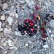 Elazığ depreminin acı bilançosu: 22 kişi hayatını kaybetti, 1243 kişi yaralandı