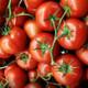 Rusya, Türkiye'den aldığı domates kotasını 50 bin ton arttırdı