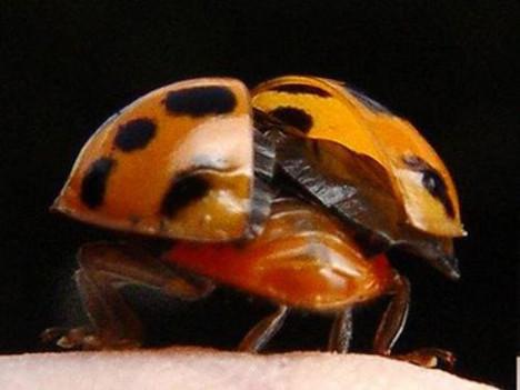 Bir uğur böceğinin yaşam öyküsü