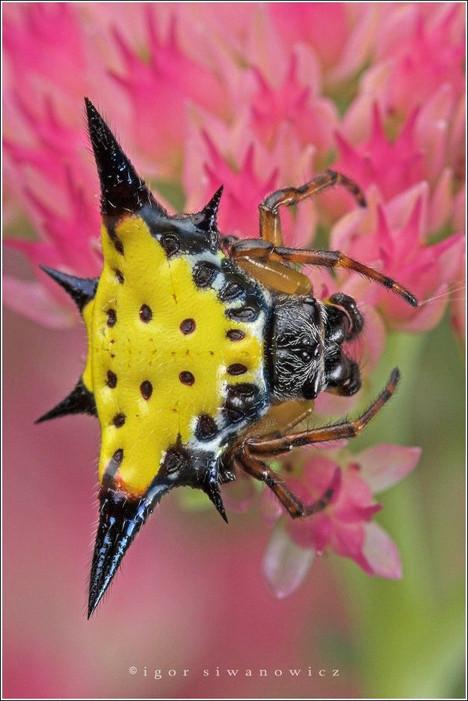 Böceklerin dünyasına yakından bakın