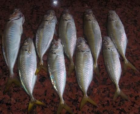 Mevsimine göre balık çeşitleri...