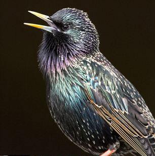 Kuşlar korku saldı