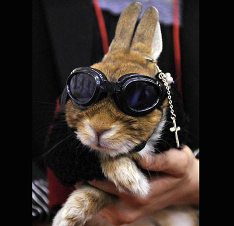 Tavşanların defilesi