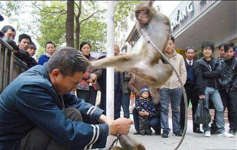 Tekvandocu maymun sahibini dövdü