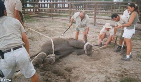 PETAyı kızdıran görüntüler