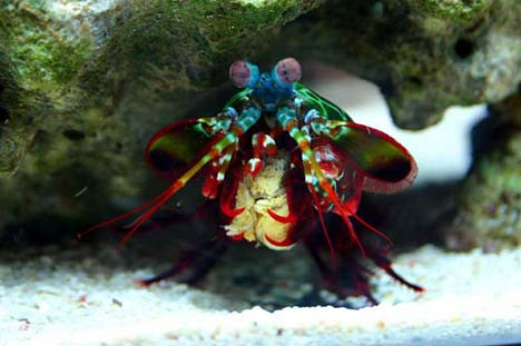Suyun altındaki güzellikler