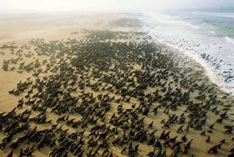 Gökyüzünden Afrika
