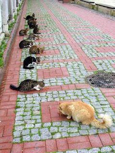 Kediler konuşursa..