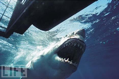 Köpekbalıklarının gerçek yüzü