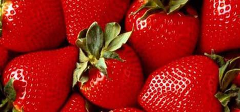 Zekayı arttıran besinler