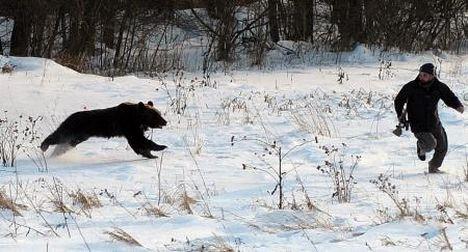 Dişi ayı korucuyu fena kandırdı !