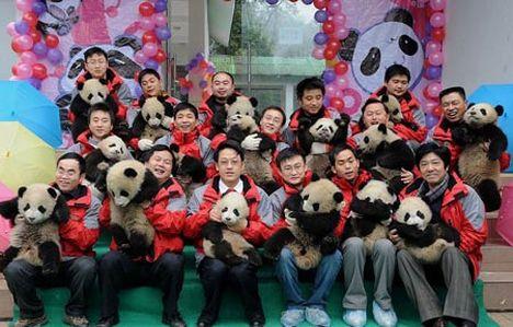 Pandalar anaokulunda