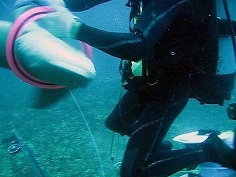 Köpekbalığını böyle kurtardılar