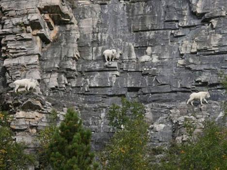 Korkusuz keçiler macera peşinde
